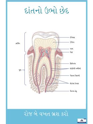 Poster Gujarati Cross Section of Teeth PG-022